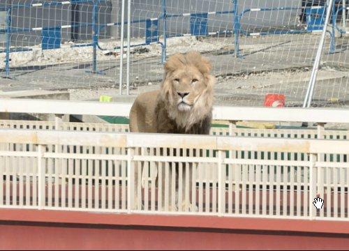 Ein Löwe steht auf der linken Seite der roten Brücke